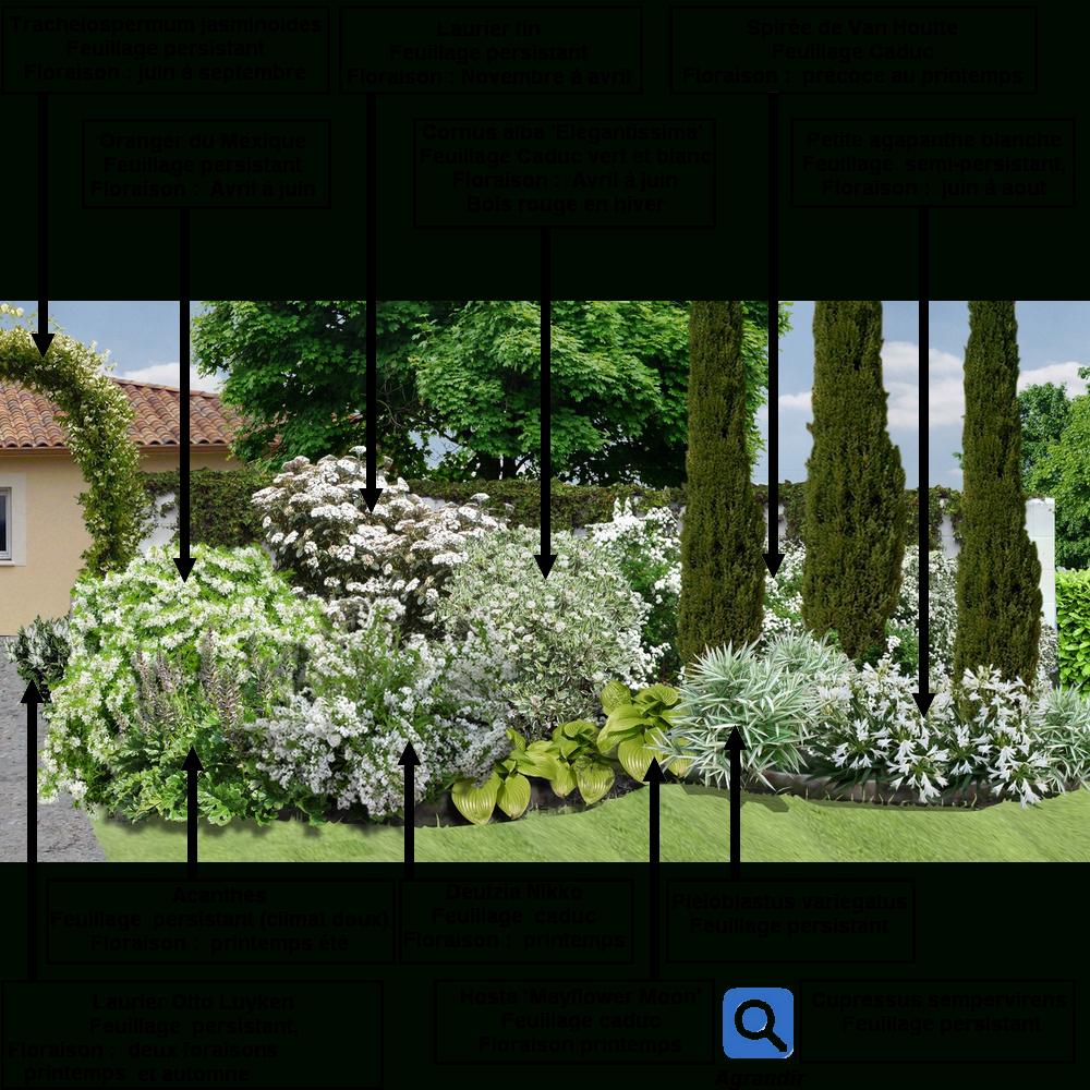 Créer Un Massif D'arbustes Vert Et Blanc : | Jardin Massif ... avec Modèle De Jardin Fleuri