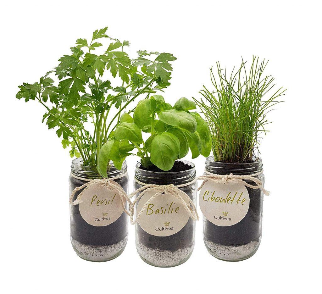 Cultiveo Kit Prêt À Pousser Herbes Aromatiques : Test Et ... serapportantà Jardin En Kit Pret A Planter