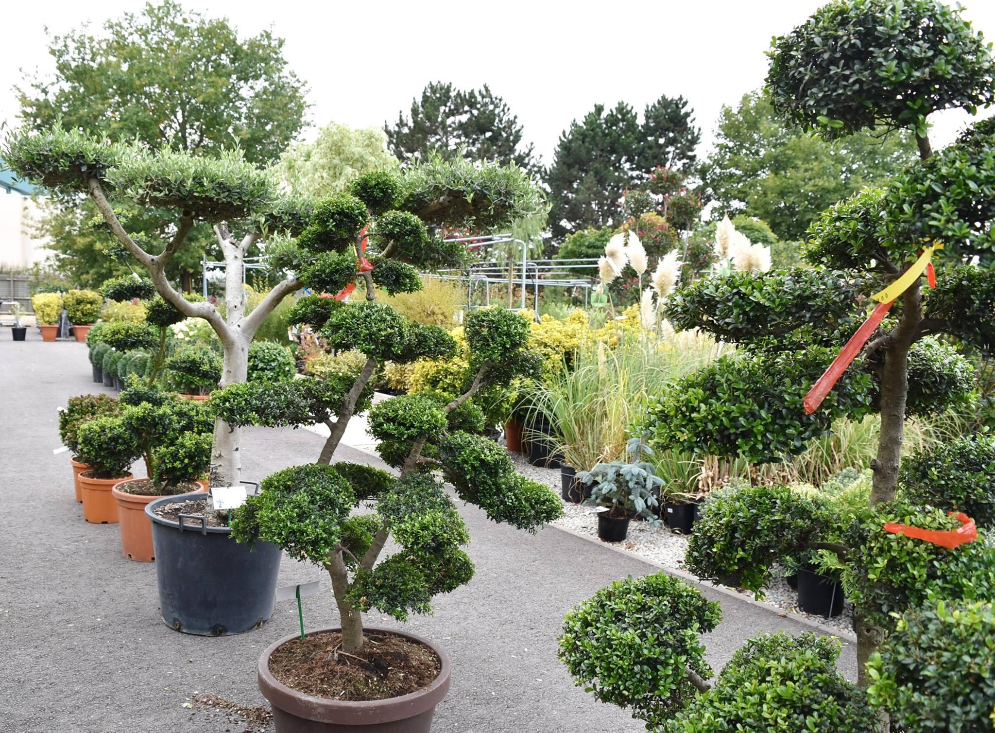 Décoration & Cadeaux, Pépinières, Plantes Vertes & Fleuries ... avec Arbustes Decoration Jardin