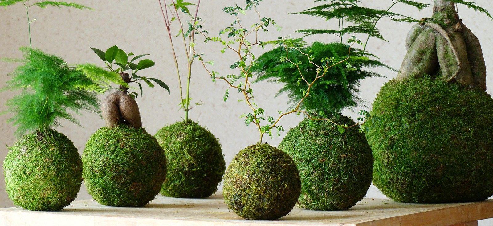 Découvrez Le Kokedama, Un Art Floral Japonais Original ... serapportantà Créer Jardin Japonais Facile