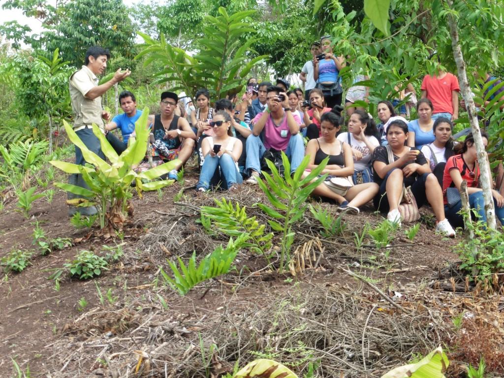 Des Nouvelles Du Jardin Des Colibris - Envol Vert pour Au Jardin Des Colibris
