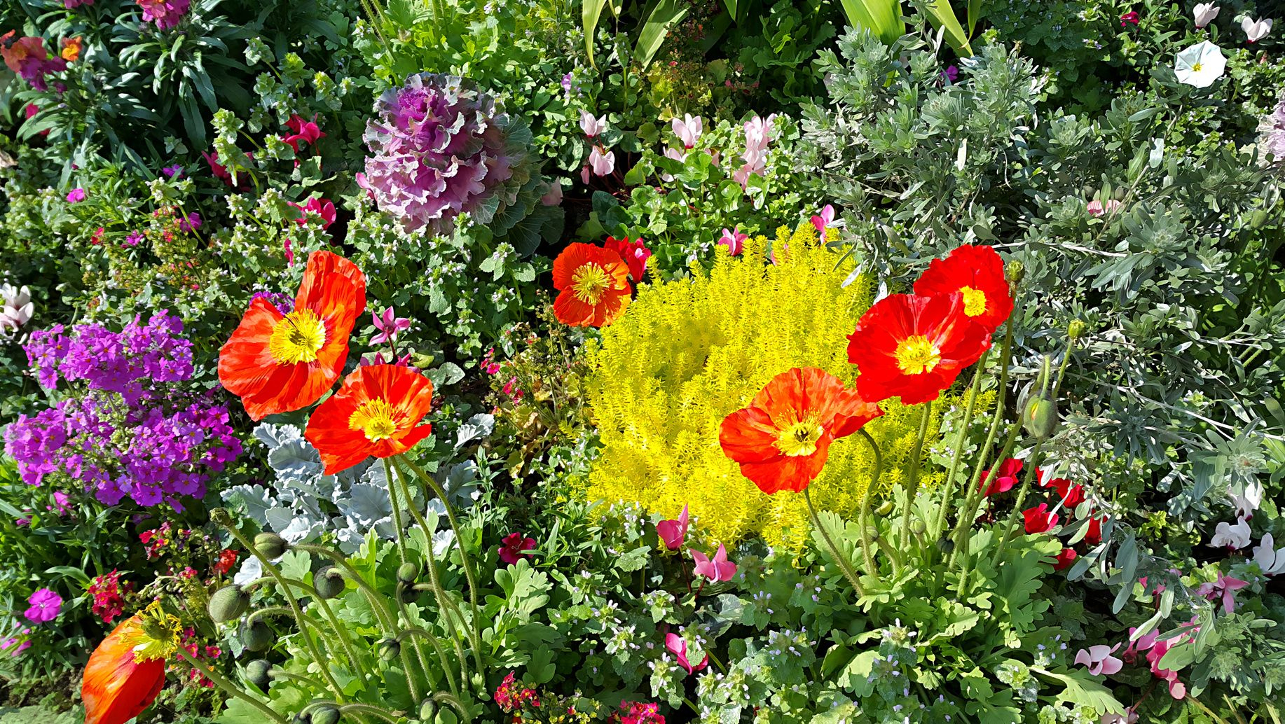 Des Plantes Lumineuses Pour Éclairer Les Zones D'ombre encequiconcerne Arbre Pour Petit Jardin