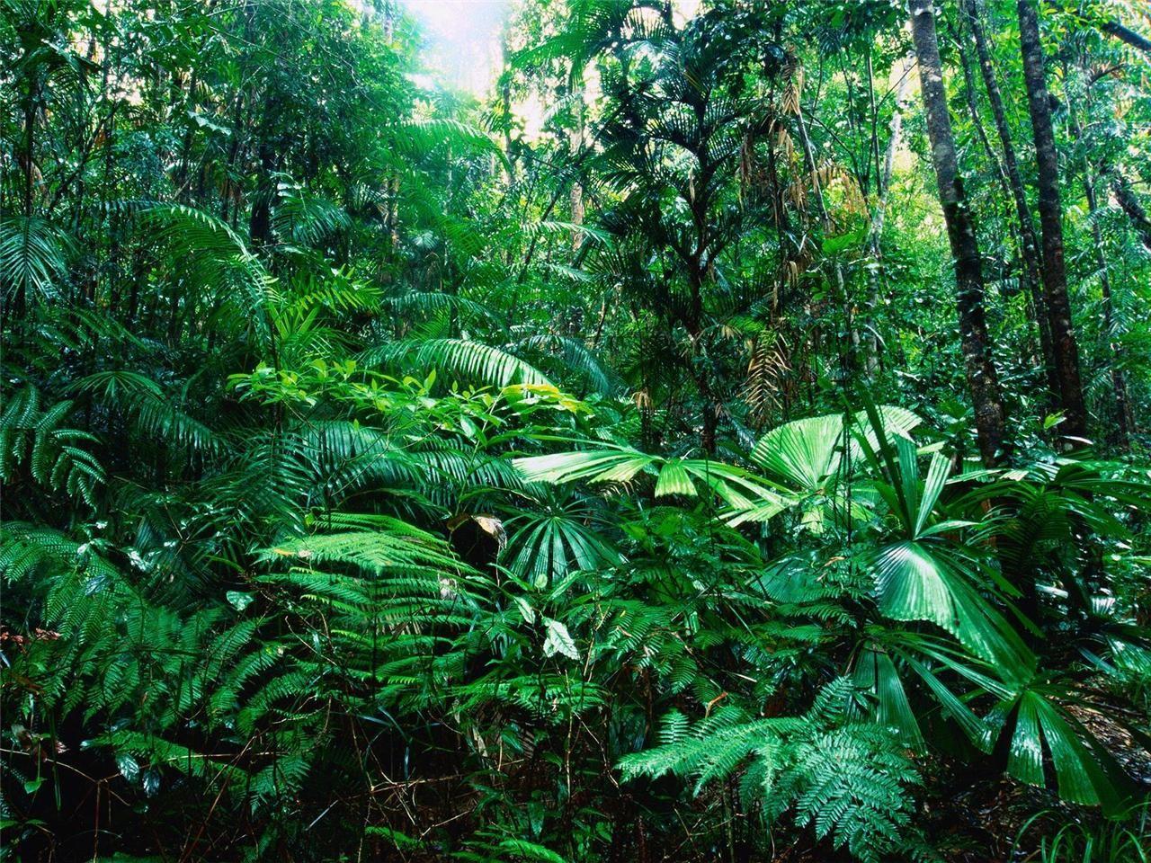 Details About Amazon Rarest Glossy Poster Picture Photo ... avec Serre De Jardin Amazon