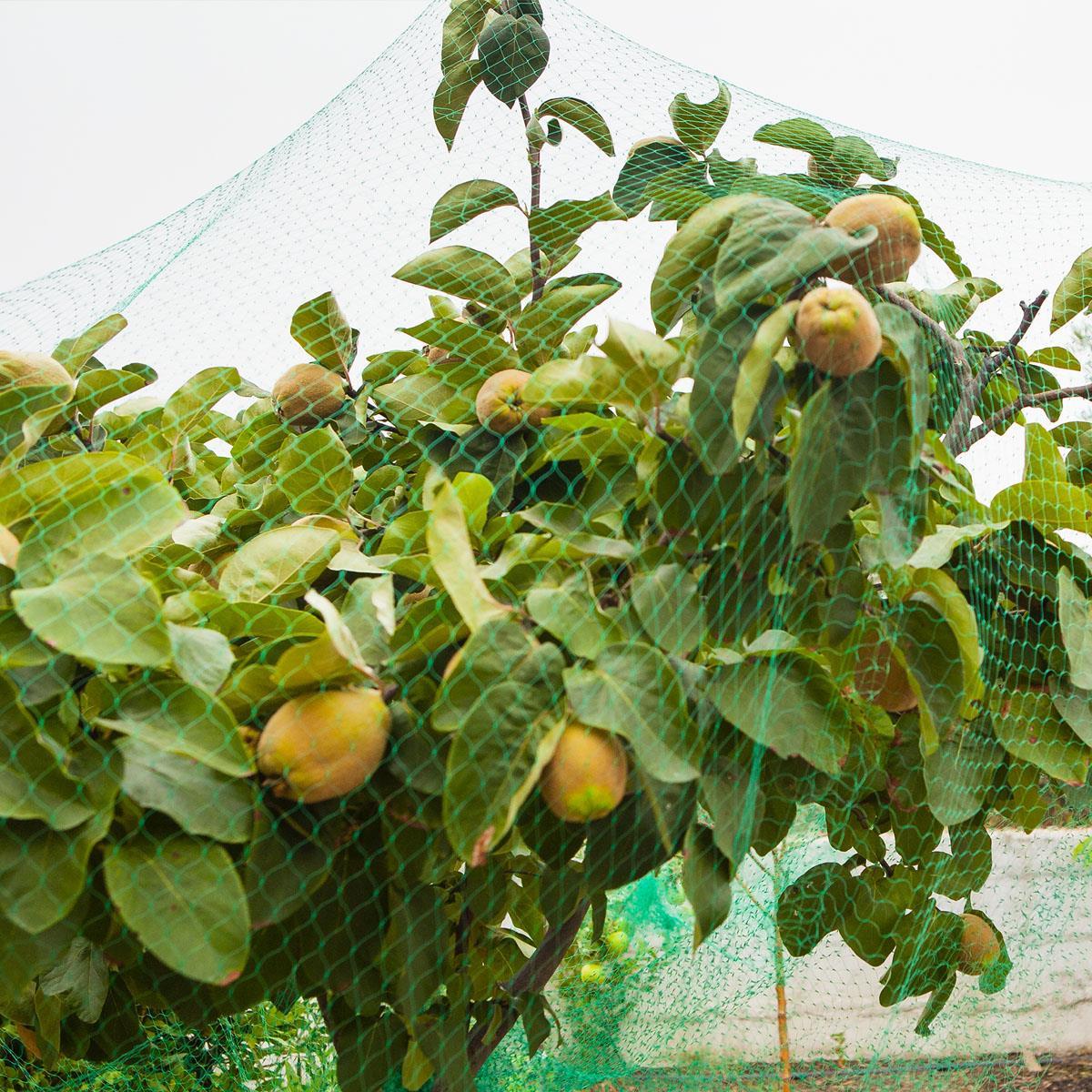 Détails Sur Anti Oiseau Pond Net Jardin Filet Légumes Fruit Cultures  Plantes Protection Housse Maille- Afficher Le Titre D'origine à Filet De Protection Jardin