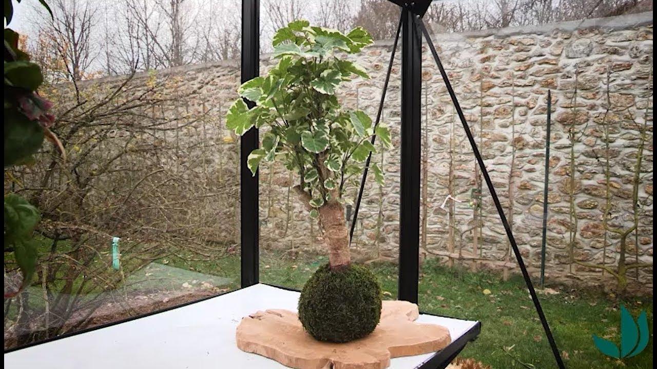 Diy : Réaliser Un Kokedama De Polyscias - Jardinerie Truffaut Tv encequiconcerne Table De Jardin Truffaut