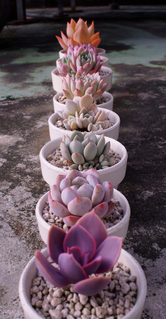 ▷ 1001 + Modèles De Parterre De Fleurs Avec Galets | Jardin ... avec Modele De Jardin Avec Galets