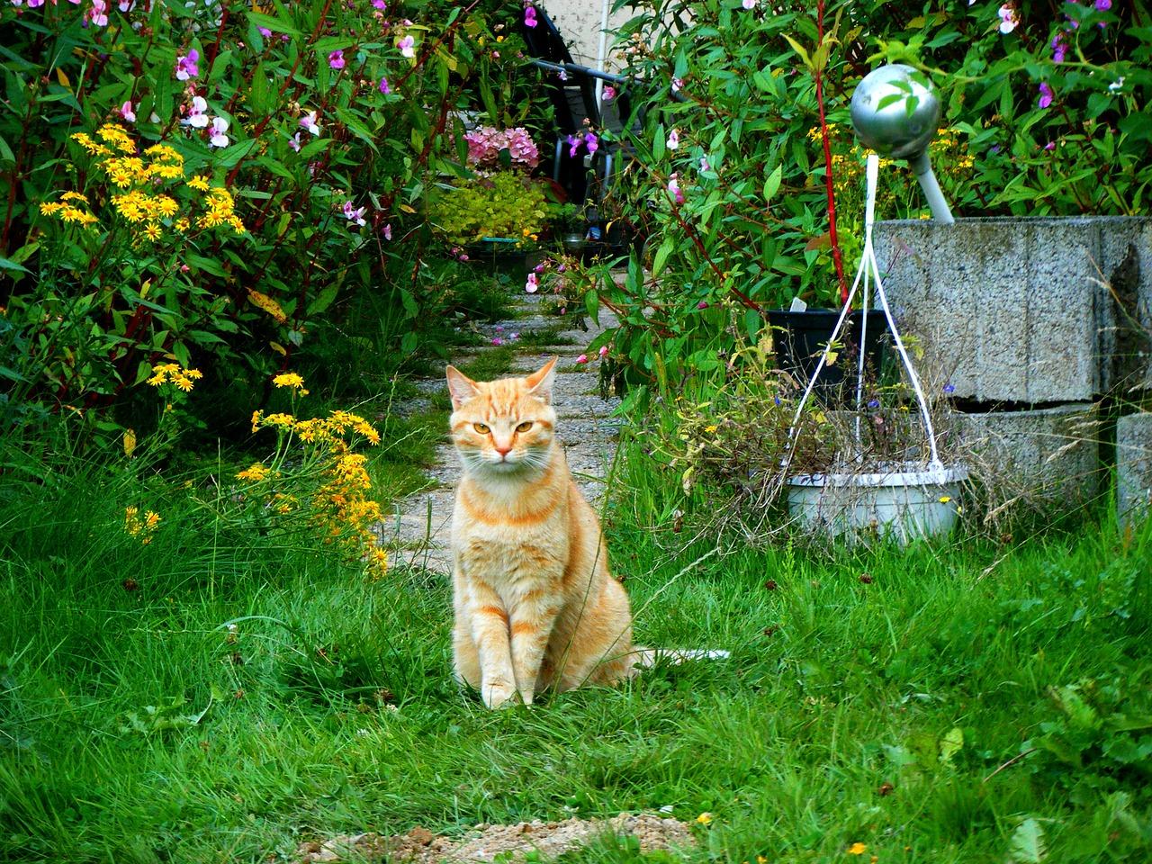 ▷ 7 Astuces Pour Éloigner Les Chats De Son Jardin Et De Son ... intérieur Repulsif Chat Jardin