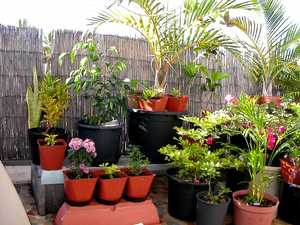 ⚛ Comment Créer Un Jardinet Sur Son Balcon D'appartement concernant Faire Un Jardin Sur Son Balcon