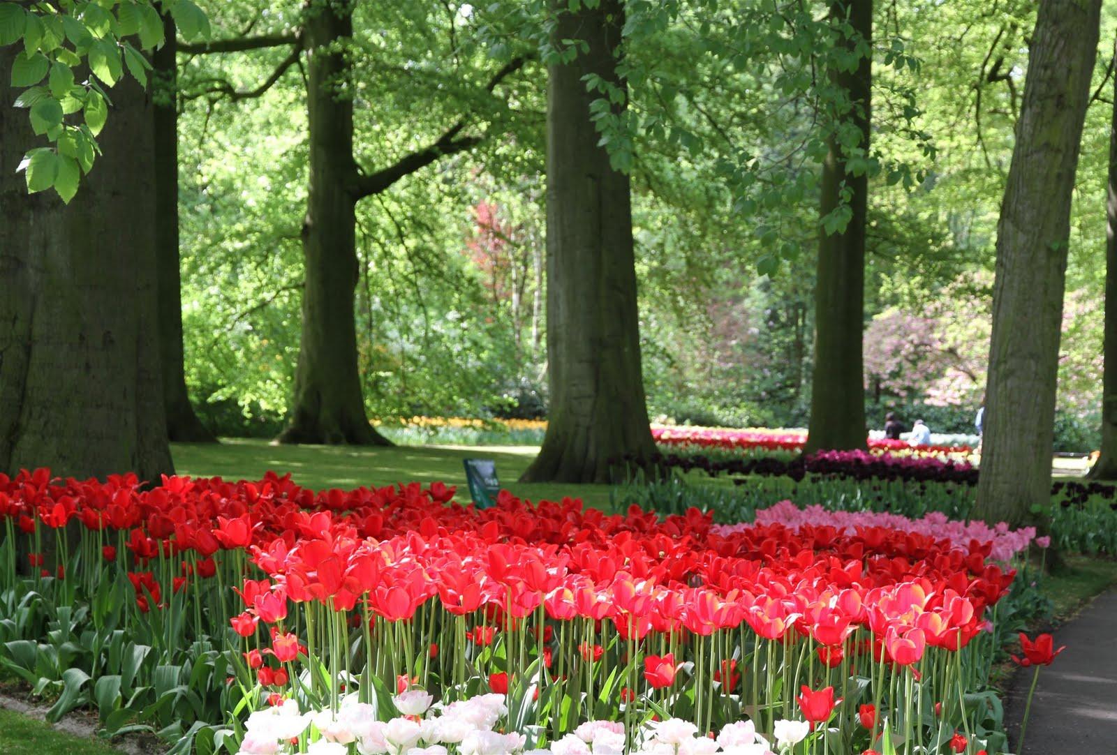 El Mundo De Maria: Keukenhof : Le Plus Beau Jardin ... intérieur Jardin De Keukenhof