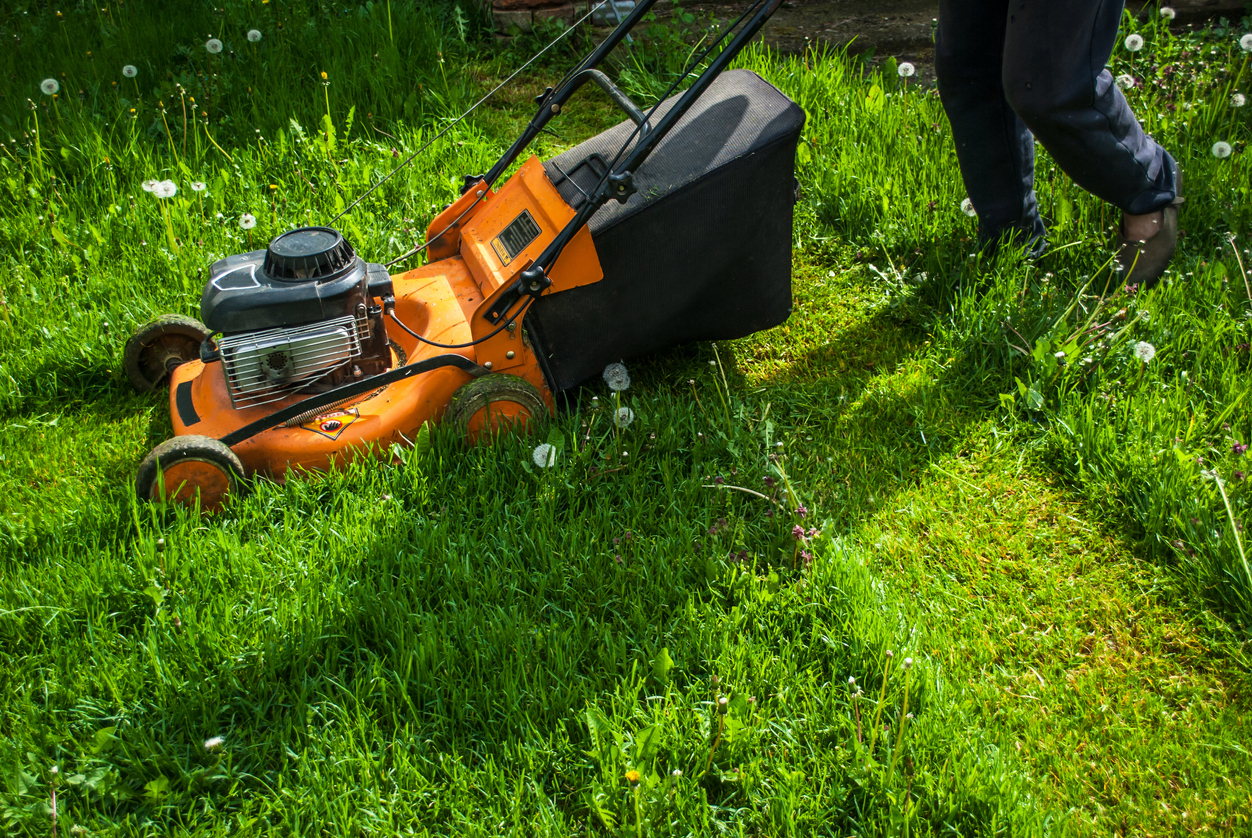 Eliminer Les Tiques Du Jardin Sans Pesticides | Santé Magazine tout Produit Anti Tique Pour Jardin