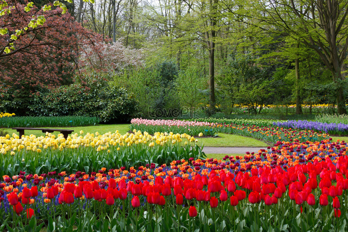 En El Jardín Keukenhof Imagen Descargar_ Foto 100070393_Jpg ... serapportantà Jardin De Keukenhof