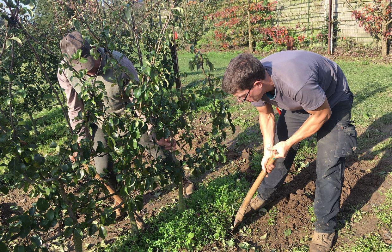 Enghien: Des Arbres Fruitiers À Planter Maintenant, Que ... tout Arbre Pour Petit Jardin