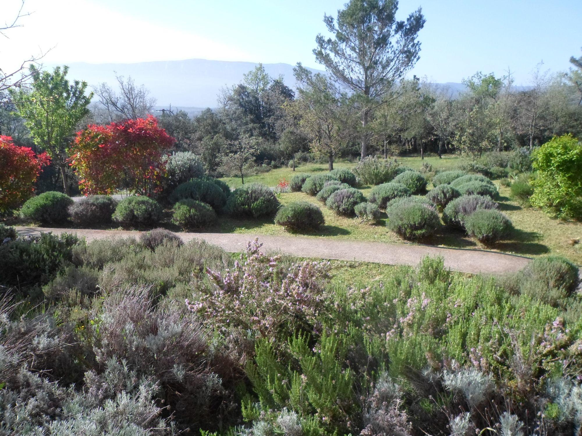 Entretien D'un Jardin Méditerranéen Pour Un Mas À Nans Les ... avec Exemple De Jardin Méditerranéen