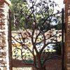 Épinglé Par Juicy Px Sur Maison - Perron   Jardins, Déco ... intérieur Decoration De Jardin En Fer Forgé