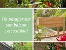 Épinglé Par Louise Harper Sur Jardinage Balcon | Potager ... tout Mini Jardin Balcon