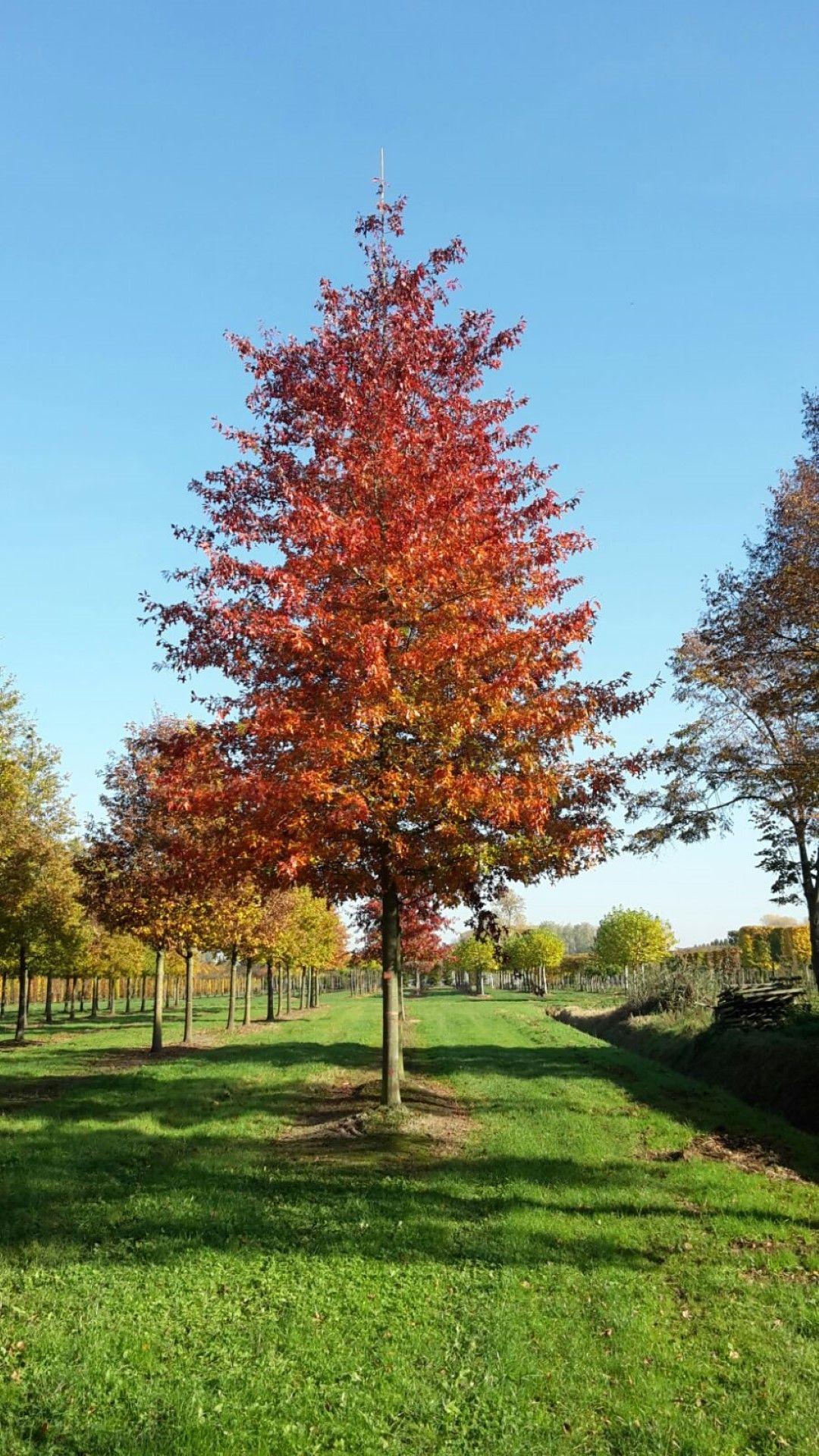 Épinglé Sur Arbres Et Arbustes Jardin serapportantà Arbre De Jardin A Croissance Rapide