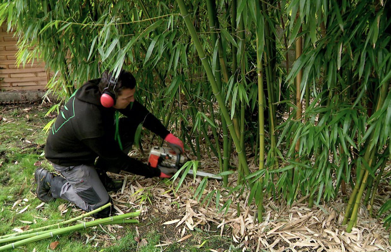 Éradiquer Les Plantes Invasives Dans Nos Jardins Avec Bambou ... pour Comment Eliminer Les Bambous Dans Un Jardin