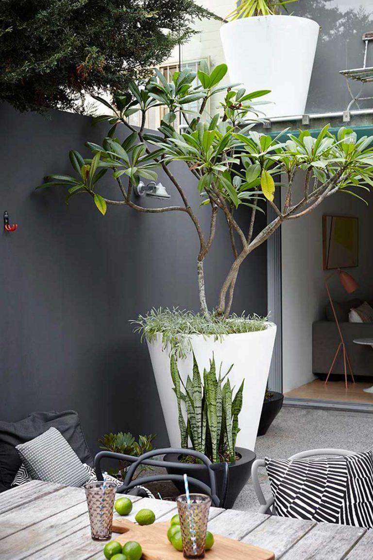 Et Si On Osait Le Noir Dans Nos Jardins ? | Dekorasyon ... tout Bache Noire Jardin