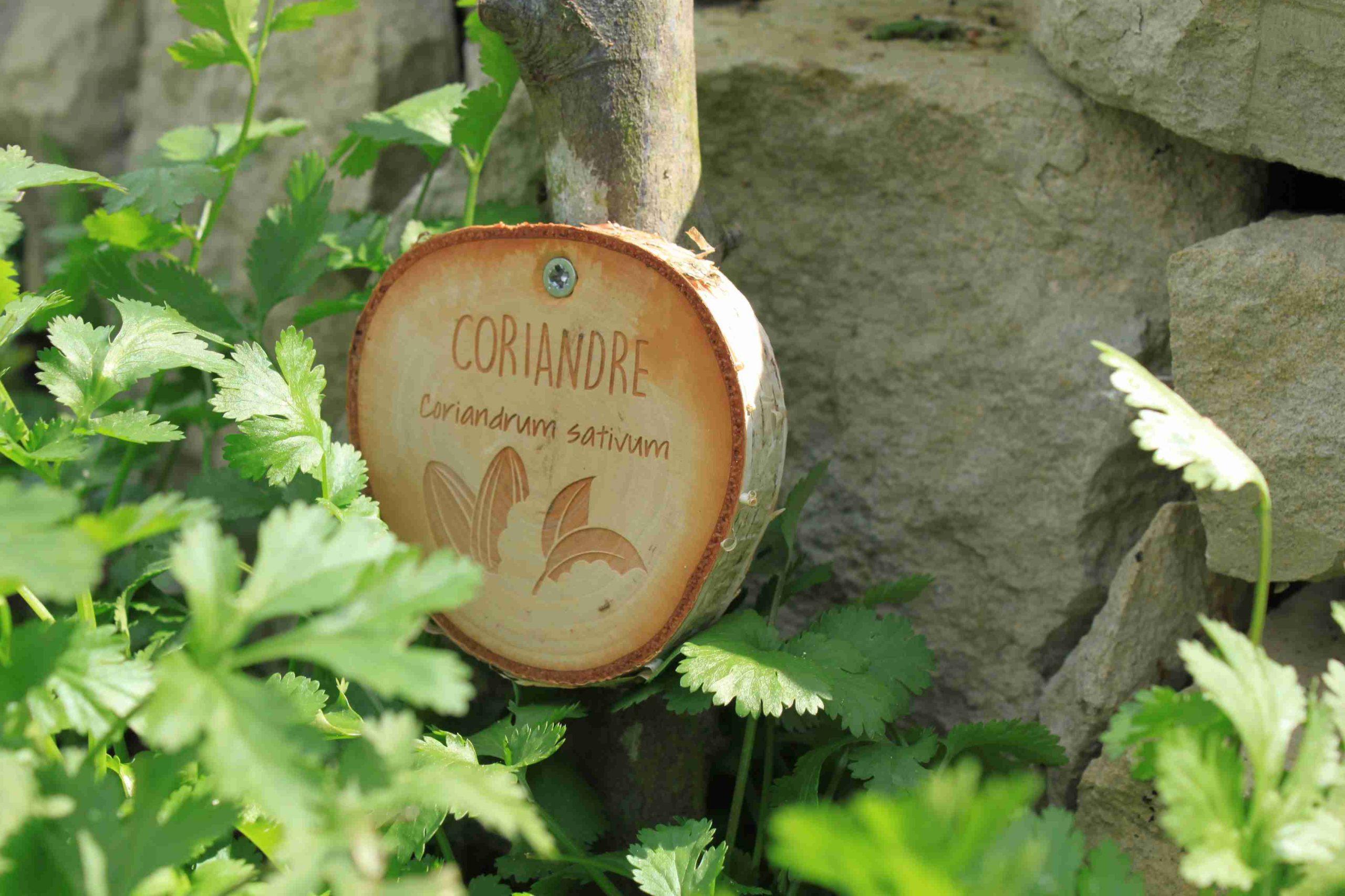 Étiquette De Jardin Gravé – E-Marqueterie à Etiquette Jardin