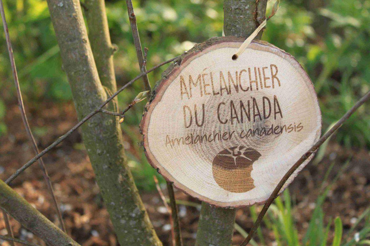 Étiquette De Jardin Gravé – E-Marqueterie intérieur Etiquette Jardin