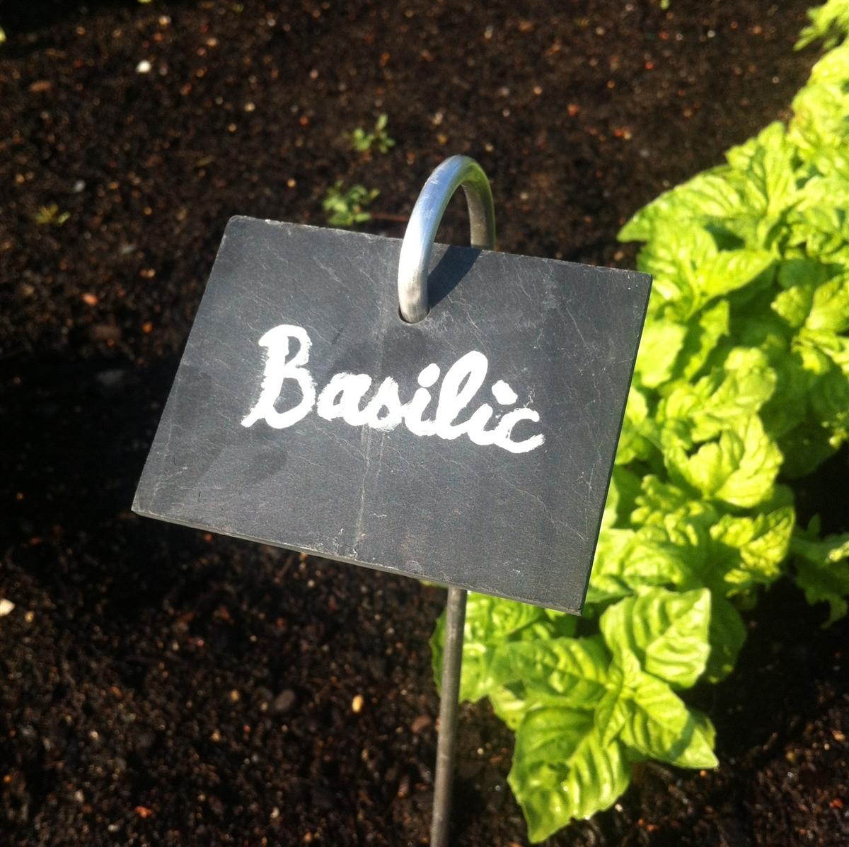 Etiquettes En Ardoise X5 - 70 X 50 Mm avec Etiquette Jardin