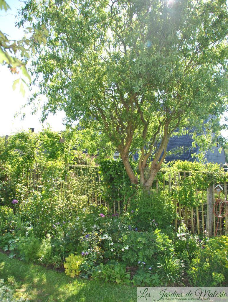 🌳 La Taille Du Saule Tortueux - Les Jardins De Malorie avec Arbre Pour Petit Jardin