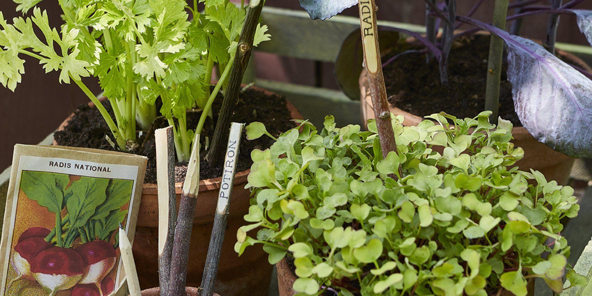 Fabriquer Des Étiquettes De Jardin Avec Des Branches ... avec Etiquette Jardin