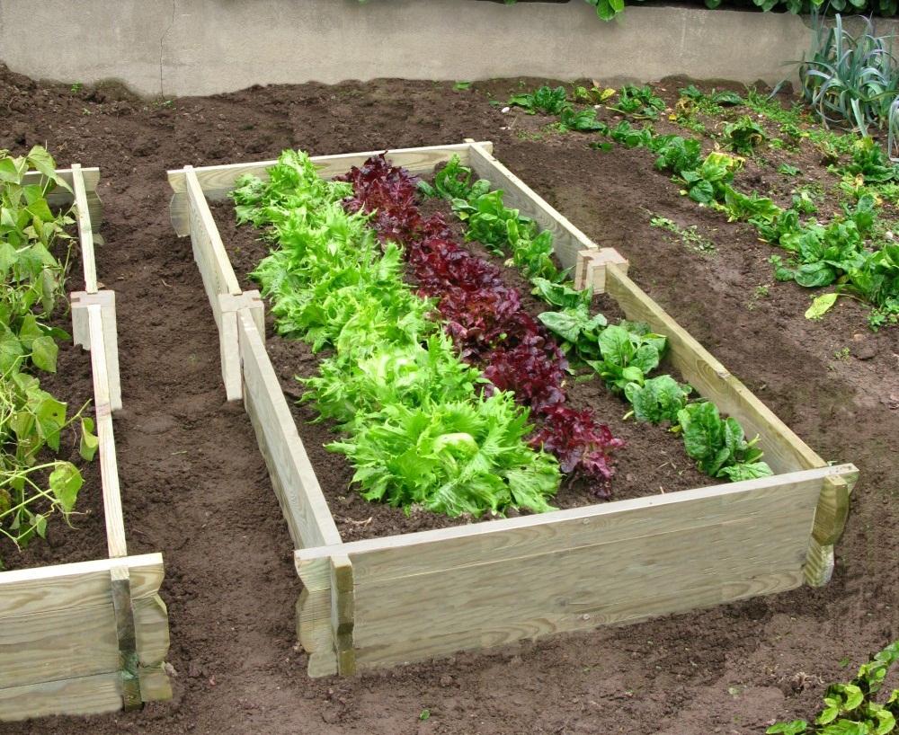 Faire Son Jardin Potager – Conseils Pour Avoir Un Beau Jardin dedans Faire Un Petit Potager Dans Son Jardin