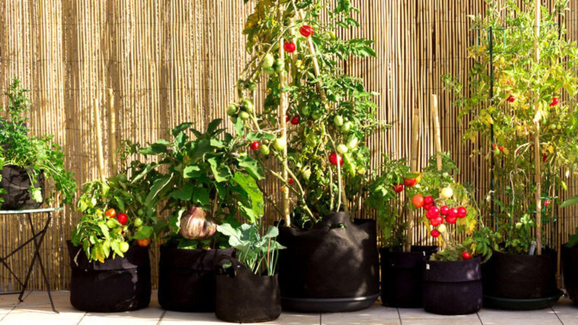Faire Un Potager Sur Son Balcon : Les Conseils D'un Pro Et ... concernant Faire Un Jardin Sur Son Balcon