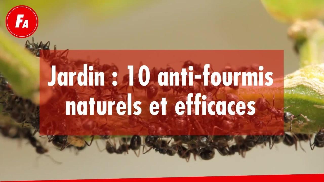 Femme Actuelle - Jardin : 10 Anti-Fourmis Naturels Et Efficaces intérieur Anti Fourmi Jardin