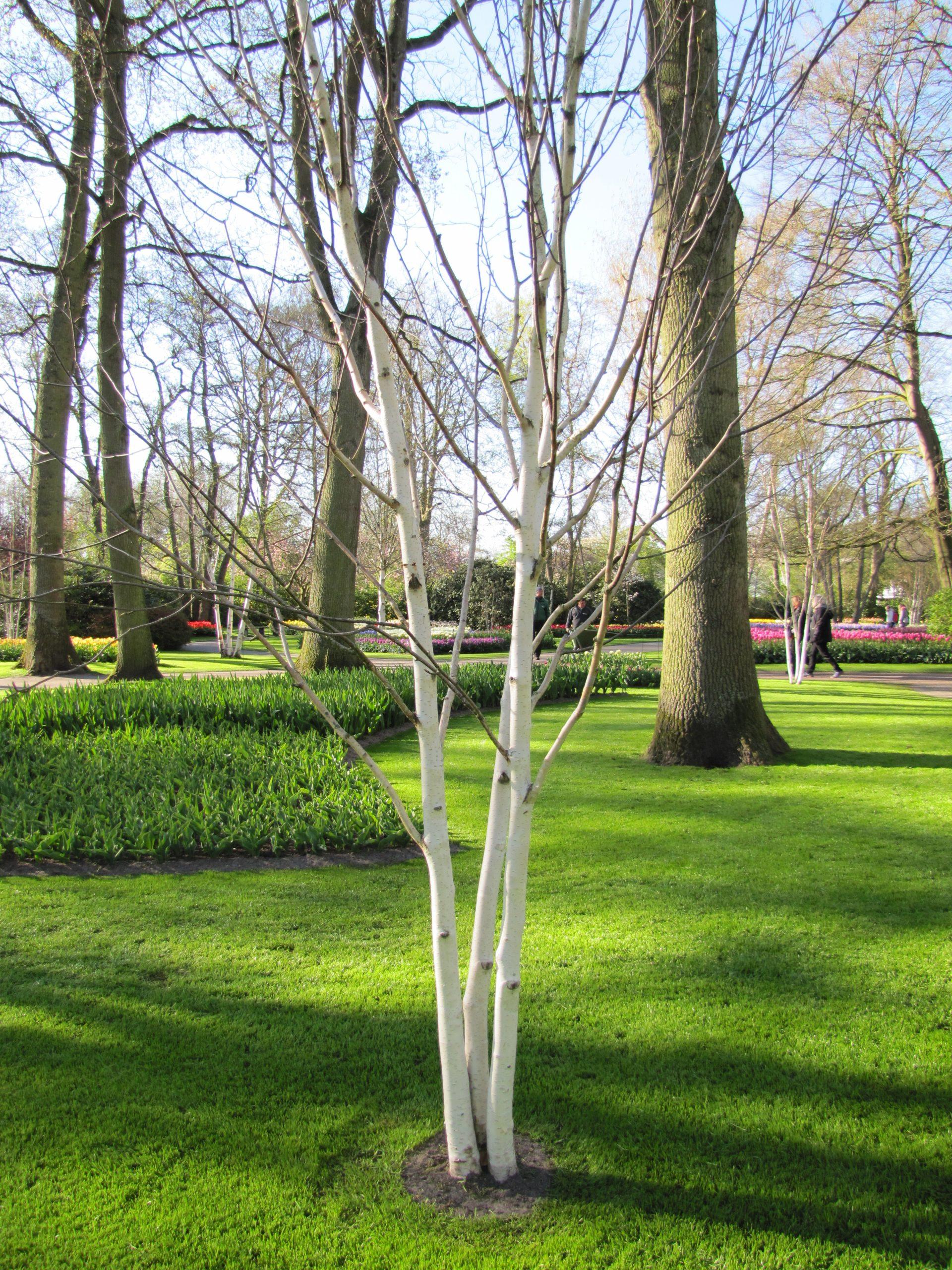 File:10 Avril 2019 - 5 - Visite De Keukenhof - Canon - 216 ... serapportantà Jardin De Keukenhof