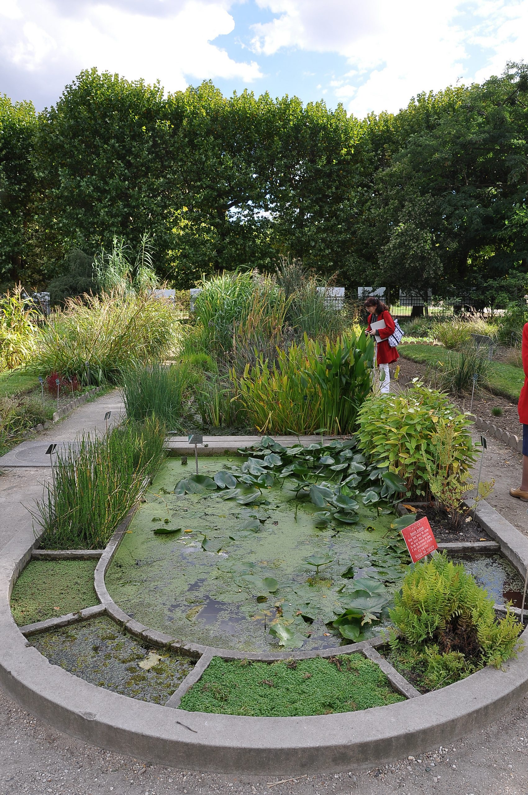 File:jardin Des Plantes - École De Botanique Paris 5E 004 ... encequiconcerne Plante Bassin De Jardin