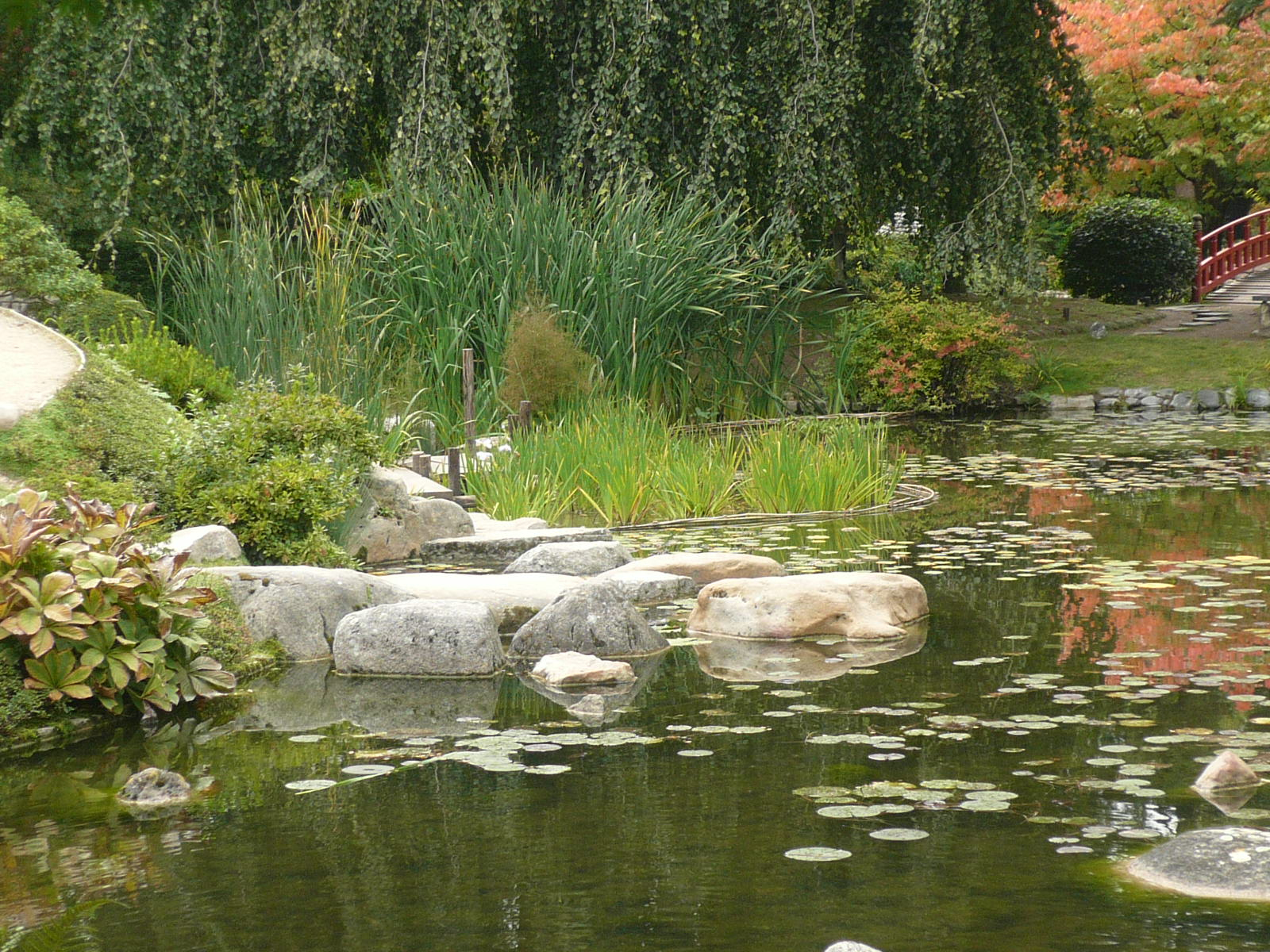 File:p1060621 Vue Rapprochee Sur Amenagement Jardin Japonais ... avec Am2Nagement Jardin