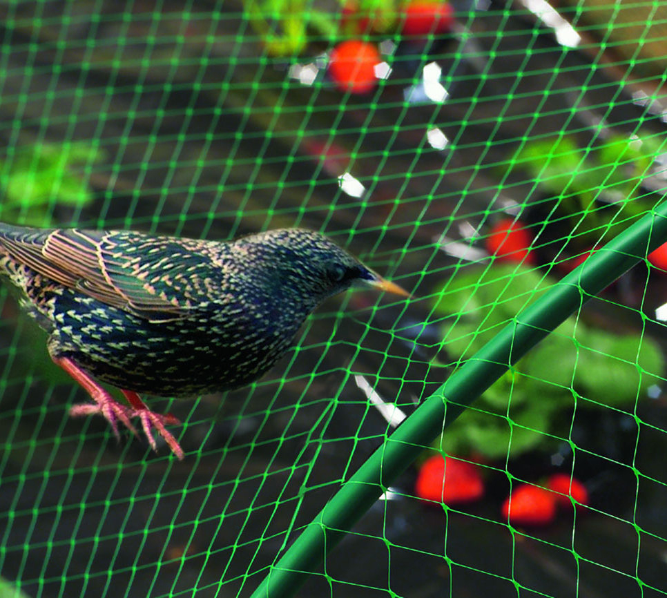 Filet Anti-Oiseaux, Maille 2 Cm X 2 Cm, Largeur 4,50 Mètres pour Filet De Jardin À Oiseaux