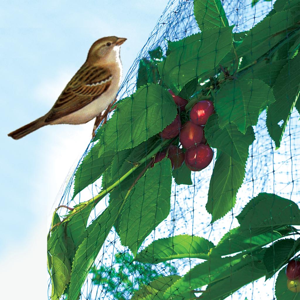 Filet De Protection Oiseaux Maille Carrée - Nortene à Filet De Jardin À Oiseaux