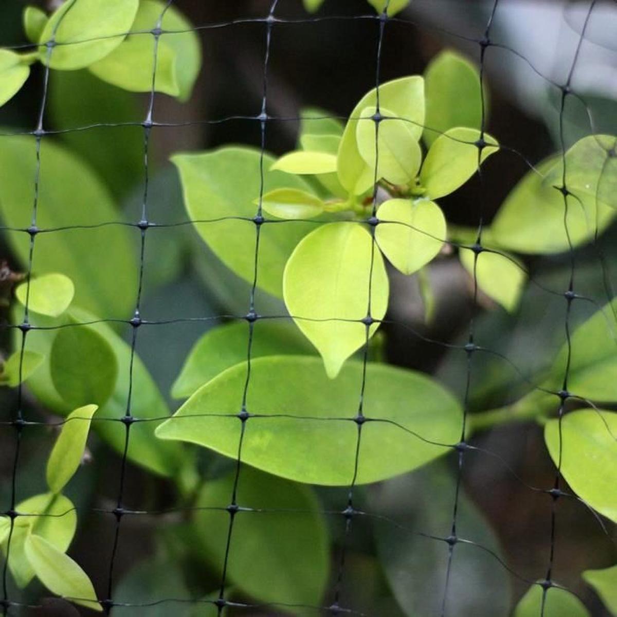 Filet De Protection Pour Oiseaux De Jardin, 2,1 M X 30 M, Filet De  Protection Pour Les Plantes, Les Fruits, Les Cerfs Et Les Bassins à Filet De Jardin À Oiseaux