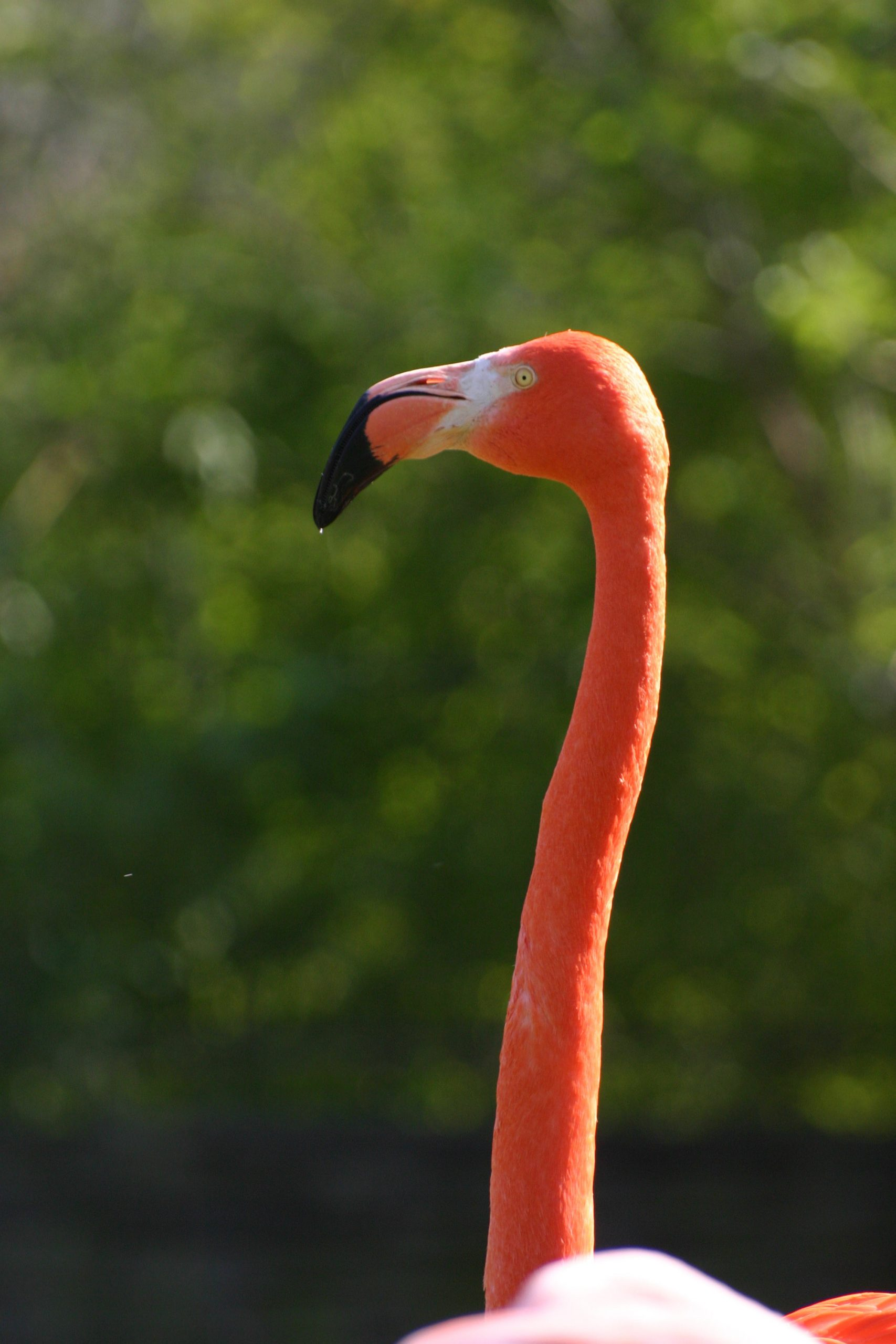 Flamingo On Freemages pour Flamant Rose Jardin
