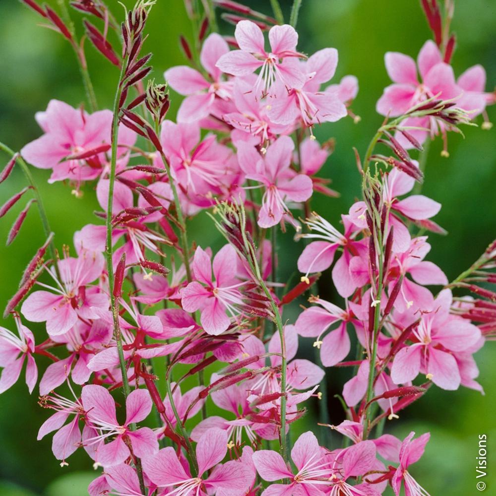 Fleur Vivace : Conseils De Plantation serapportantà Arbre Pour Petit Jardin