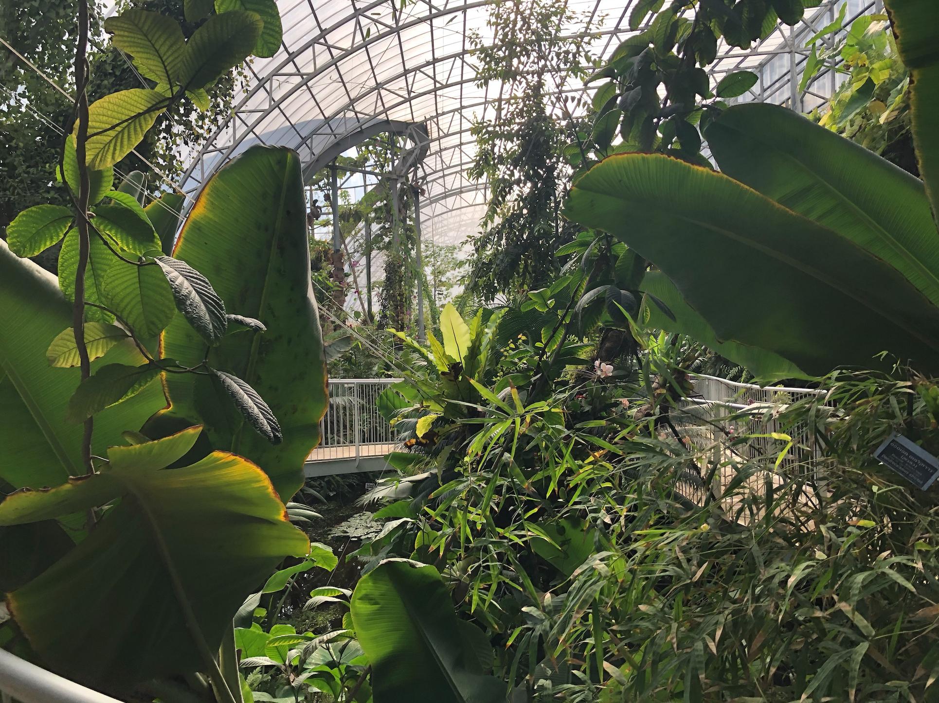 Forêt Tropicale Et Espèces Rares, Ce Jardin De Jérusalem Qui ... encequiconcerne Serre De Jardin Occasion