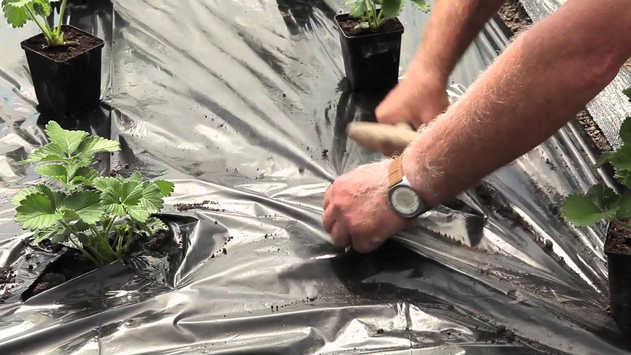 Fraisiers En Pot Film Noir intérieur Bache Noire Jardin