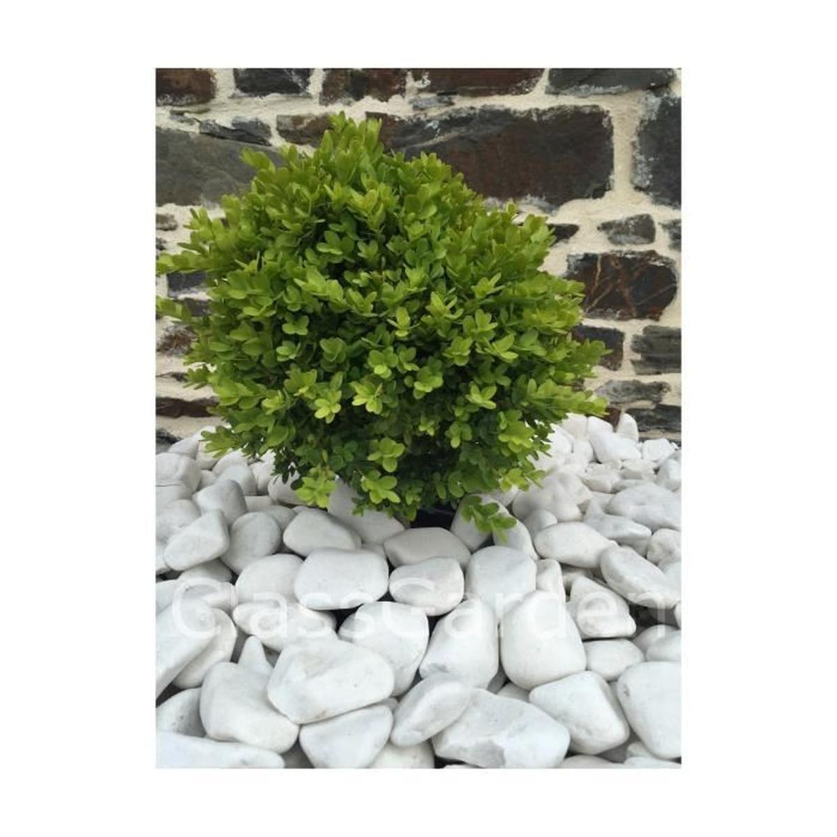 Galet Blanc Pure Calibre 40-60 Mm - Achat / Vente Galet ... dedans Galets Blancs Pour Jardin Pas Cher