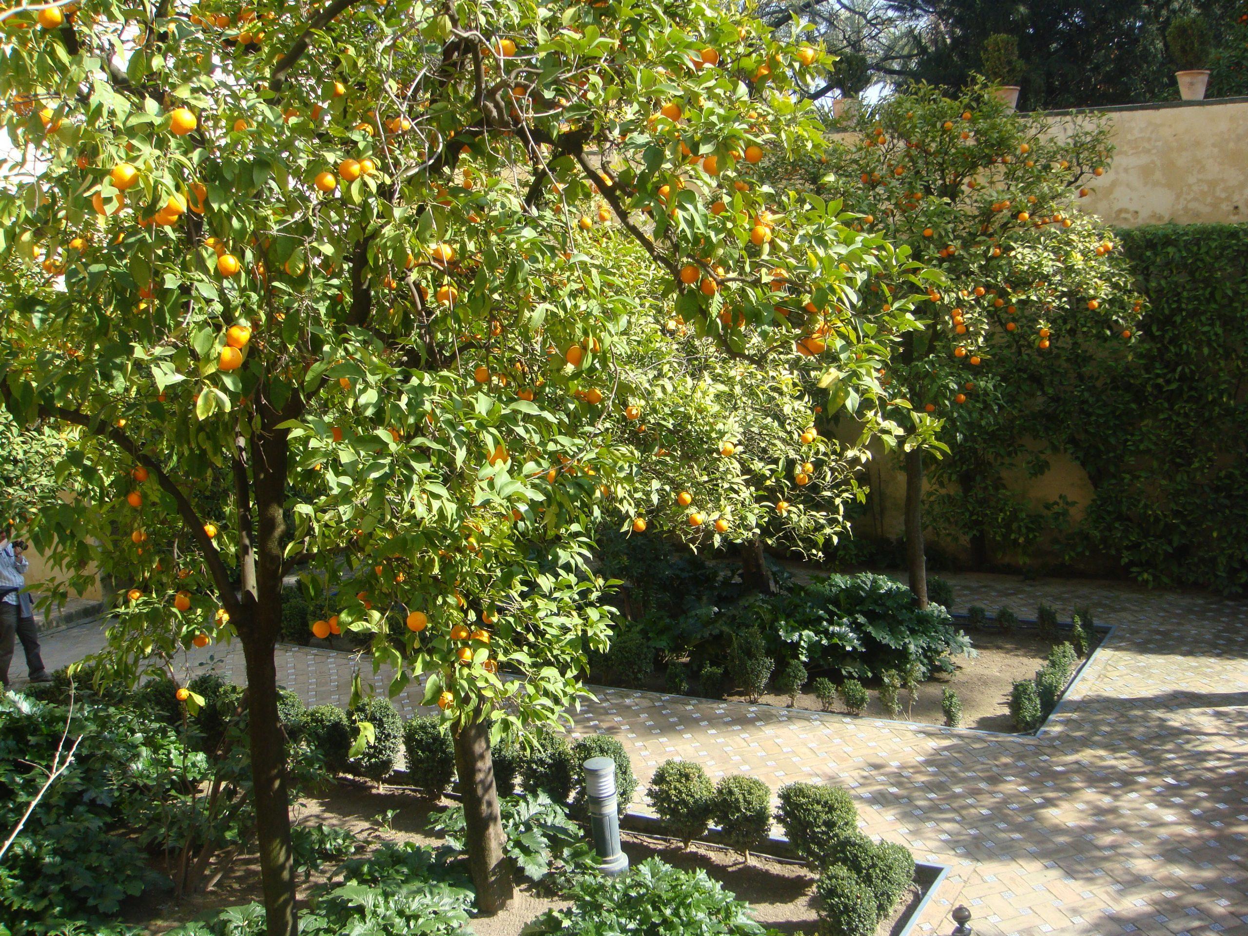 Garden Of The Galley (Jardín De La Galera) - Seville pour Delimitation Jardin