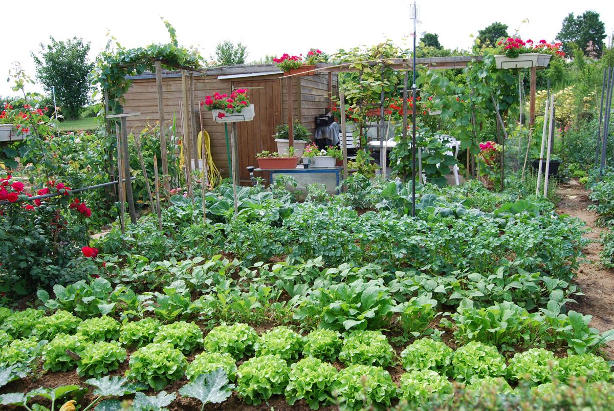 Gérer Au Mieux L'eau Au Jardin #1 – Prévenir Les Dégâts De ... encequiconcerne Acheter Un Jardin Potager