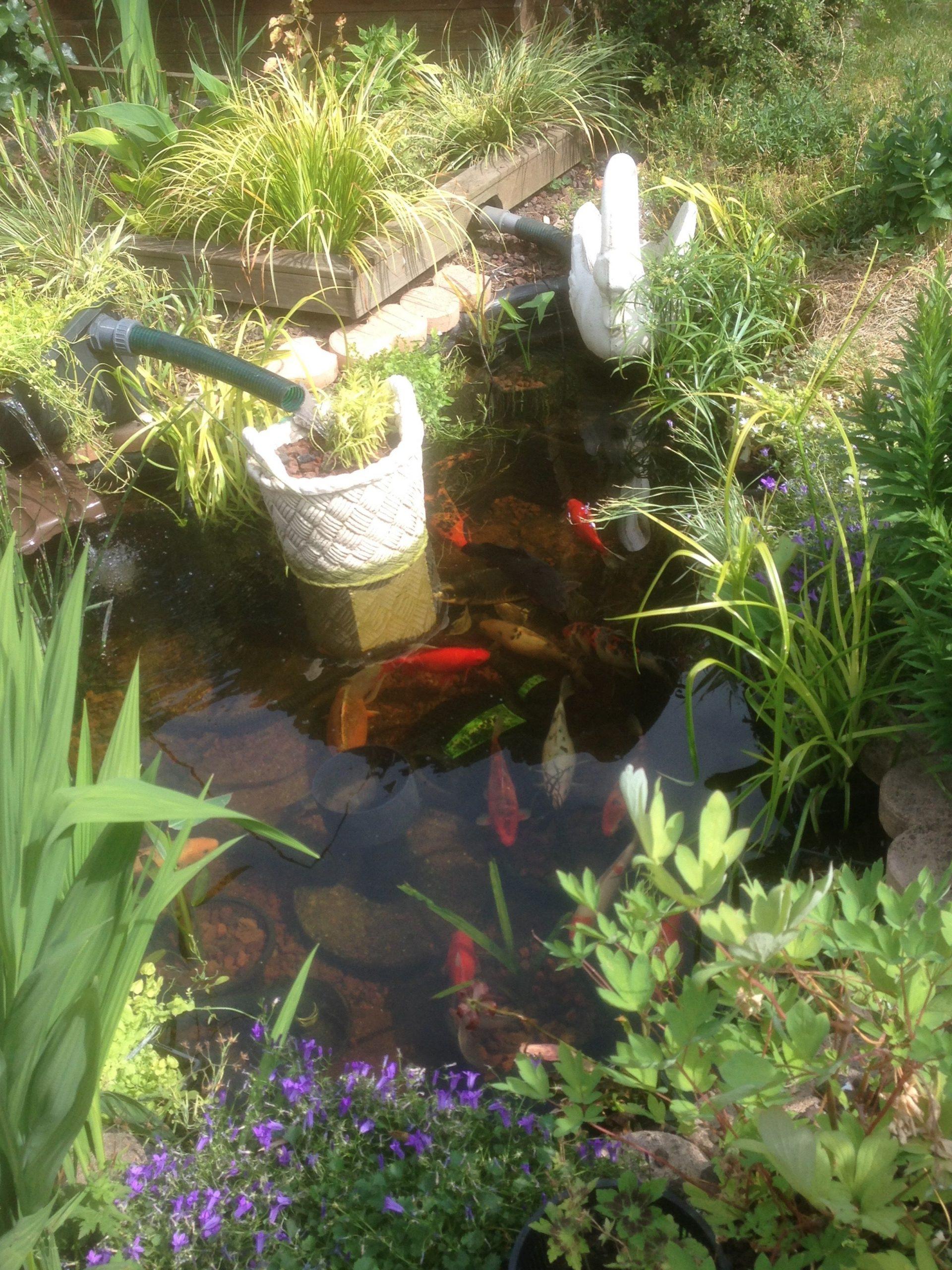 Gestion De L'eau Au Jardin : Un Bassin Sans Pompe Ni Filtre ... à Bassin De Jardin Pour Poisson