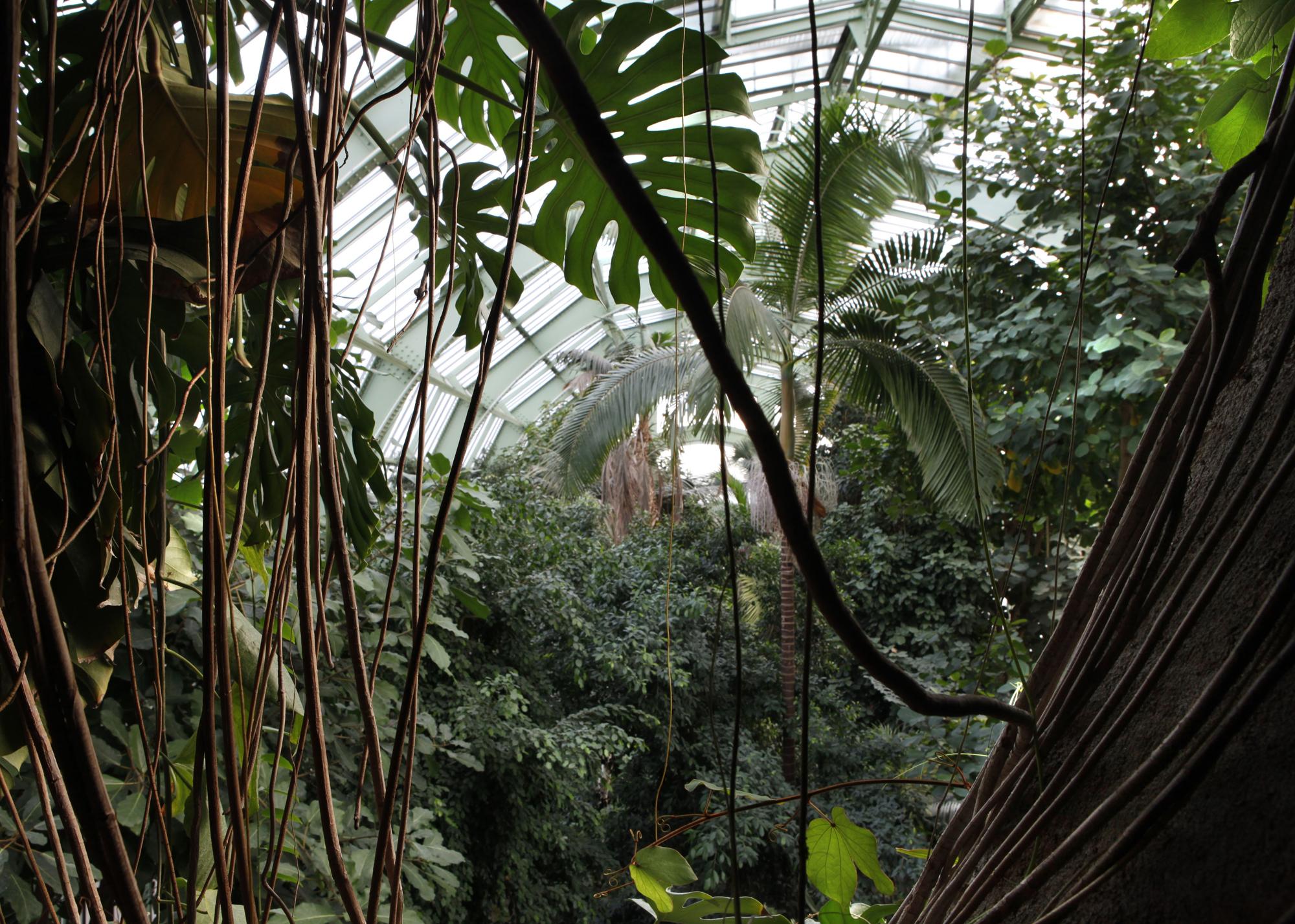 Grandes Serres Du Jardin Des Plantes (Greenhouses ... à Serre De Jardin Amazon