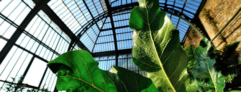 Grandes Serres Du Jardin Des Plantes (Greenhouses) | Muséum ... encequiconcerne Verriere Jardin