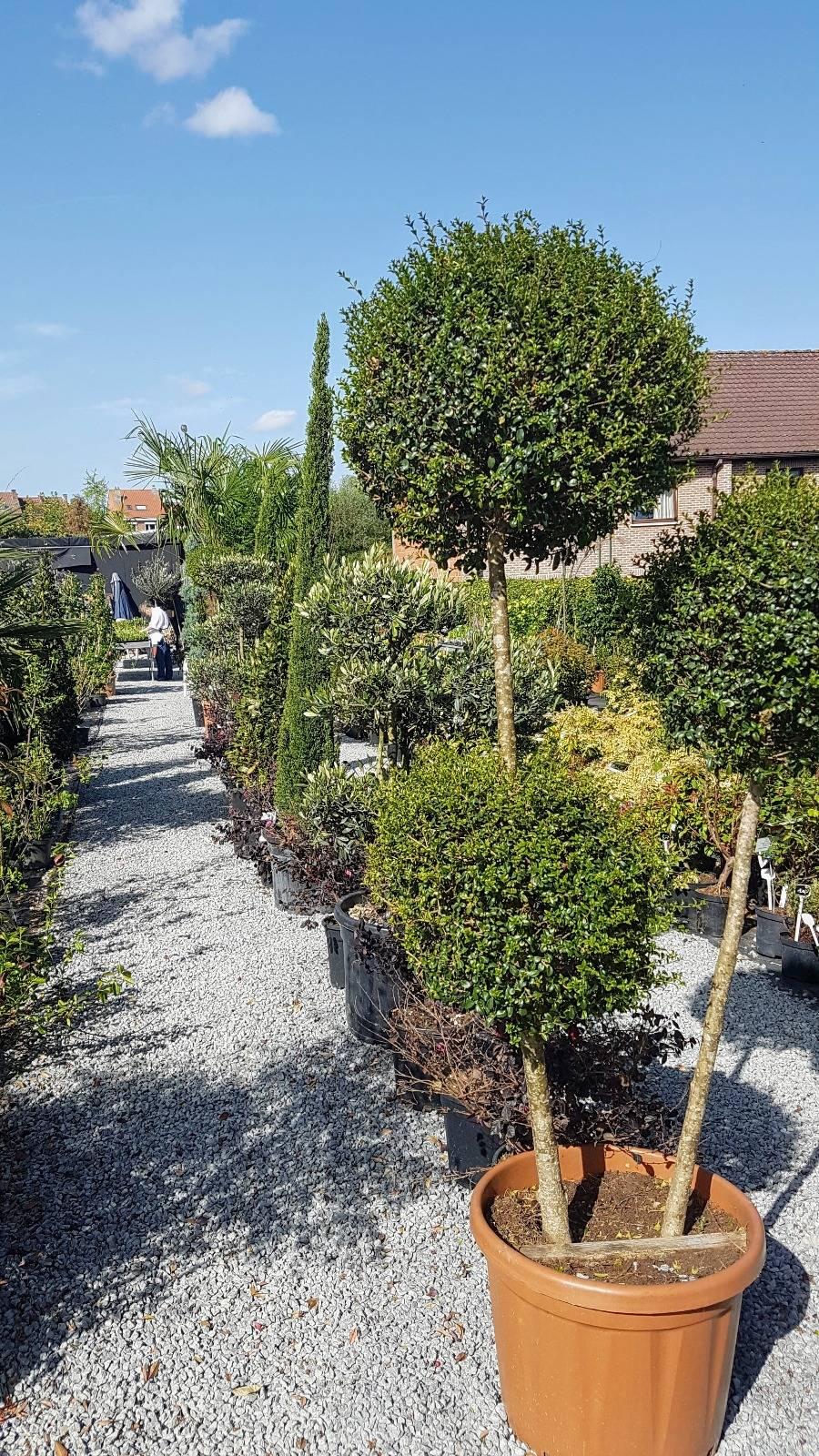 Green Spirit Garden Center — Jardinerie À Linkebeek à Ecorces Jardin