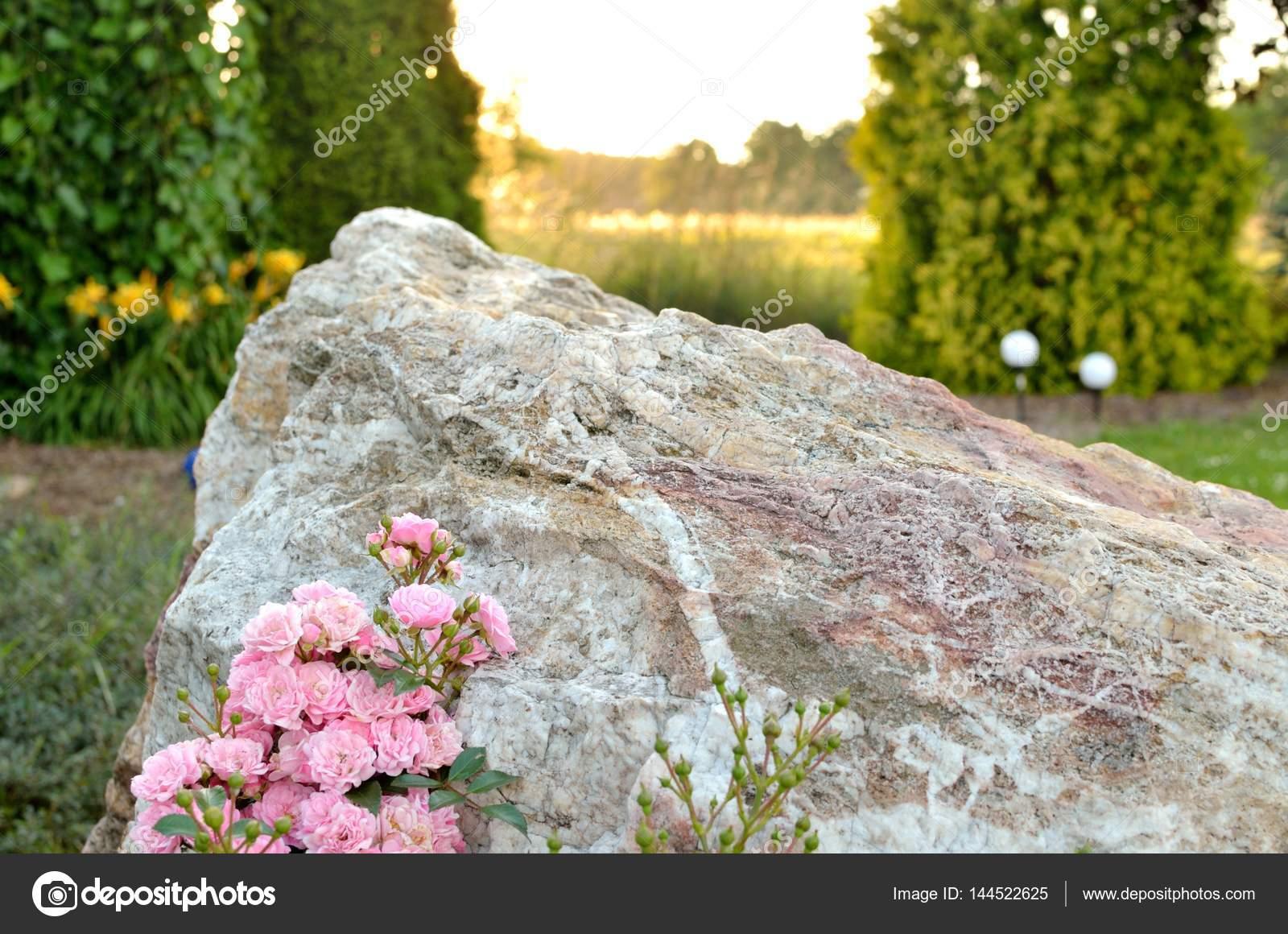 Grosse Pierre Et Rose Dans Le Jardin D'été Au Coucher Du ... intérieur Grosse Pierre Decoration Jardin