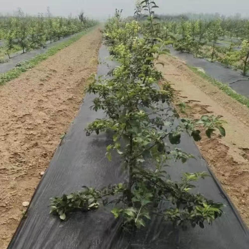 Grossiste Geotextile Jardin-Acheter Les Meilleurs Geotextile ... pour Geotextile Jardin