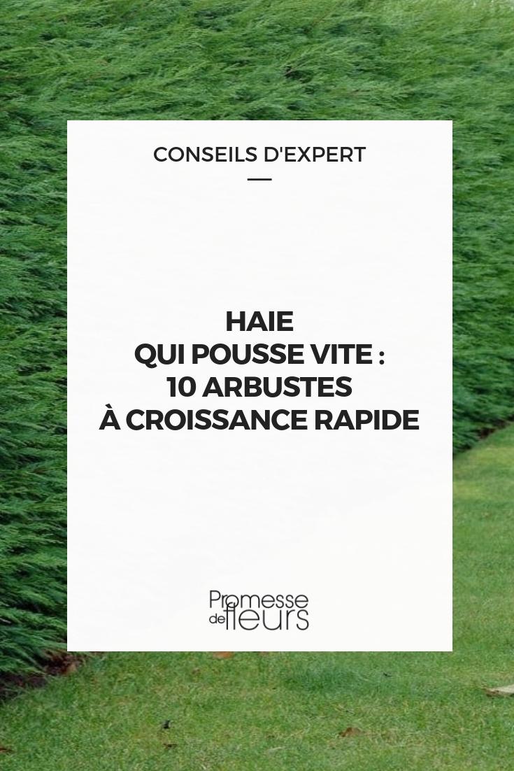 Haie À Croissance Rapide : 10 Arbres Et Arbustes Qui ... avec Arbre De Jardin A Croissance Rapide